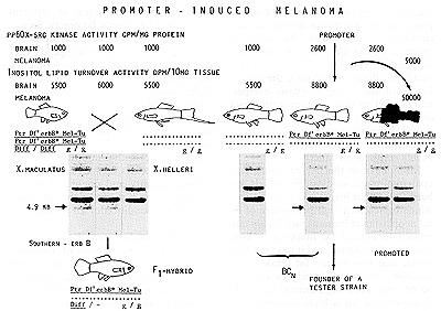 trenbolone nutrient partitioning